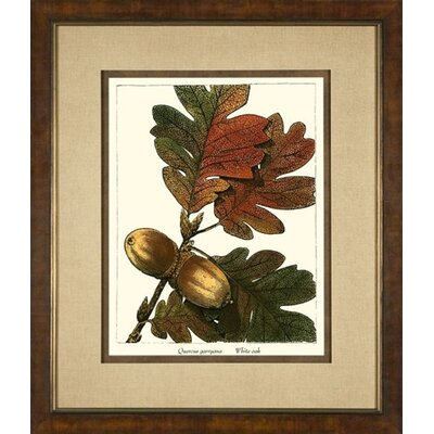 Large White Oak Framed Print