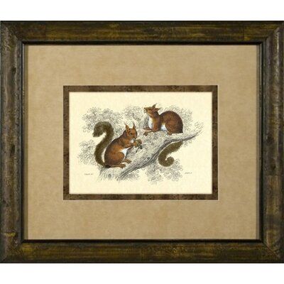 Phoenix Galleries Squirrel Framed Print