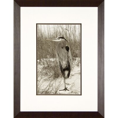 Phoenix Galleries Heron at Rest Framed Print