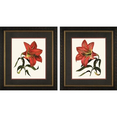 Phoenix Galleries Red Lily Framed Prints