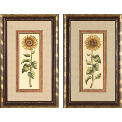 Phoenix Galleries Sunflower Framed Prints