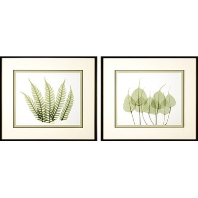 Phoenix Galleries Woodlands Framed Prints