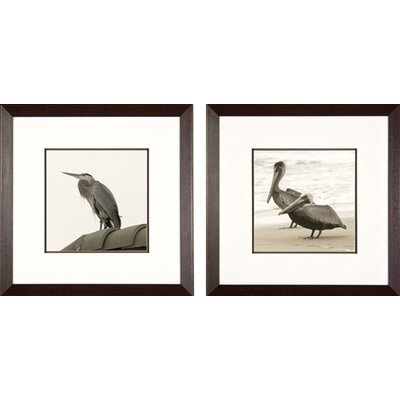Phoenix Galleries Pelicans Framed Prints