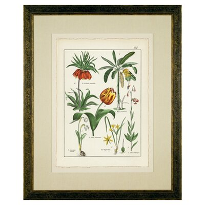 <strong>Phoenix Galleries</strong> Tulips Framed Print