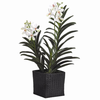 "Tori Home 28"" Vanda Orchid Plant with Woven Basket"