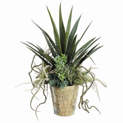 Tori Home Yucca, Succulents in Ceramic Pot