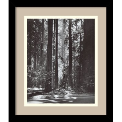 'Redwoods, Founders Grove, 1966' by Ansel Adams Framed Photographic Print