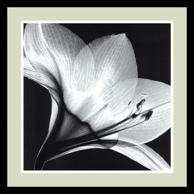 "Amanti Art Amaryllis 1 by Steven N. Meyers, Framed Print Art - 20.91"" x 20.91"""