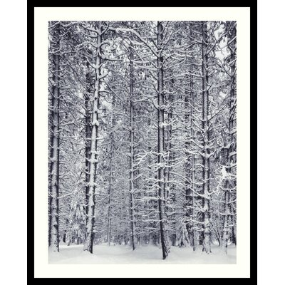 Pine Forest in the Snow, Yosemite National Park by Ansel Adams, Framed Print Art - ...