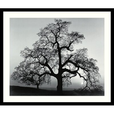 Oak Tree, Sunset City, California, 1962 by Ansel Adams, Framed Print Art - 23.04