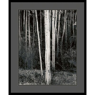 Aspens by Ansel Adams, Framed Print Art - 33.04
