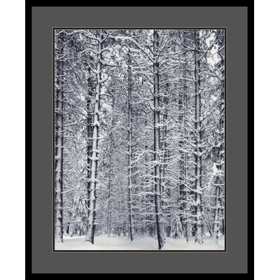 "Amanti Art Pine Forest in the Snow, Yosemite National Park by Ansel Adams, Framed Print Art - 33.04"" x 27.04"""