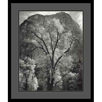 Autumn Tree Against Cathedral Rocks by Ansel Adams, Black Matted Framed Print Art - 25.04