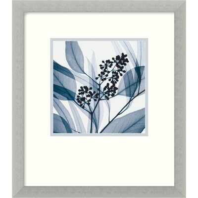 "Amanti Art Eucalyptus I by Steven N. Meyers, Framed Print Art - 16.68"" x 14.68"""