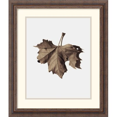 Amanti Art Norway Maple Framed Art Print by Alan Blaustein