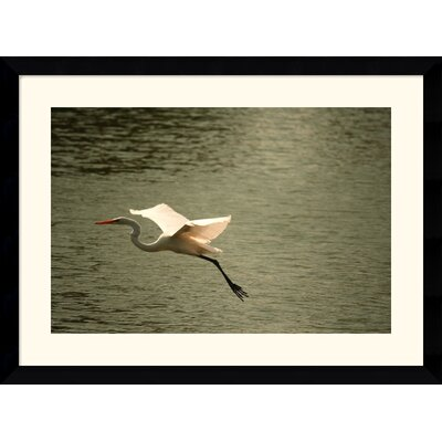 "Amanti Art Crane by Andy Magee Framed Fine Art Print - 28.62"" x 38.62"""