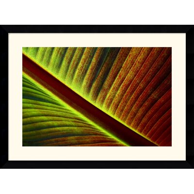 "Amanti Art Palm by Andy Magee Framed Fine Art Print - 28.62"" x 38.62"""