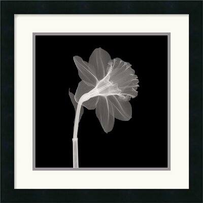 "Amanti Art Veiled Blossom Framed Art Print Framed Decorative Art Print - 18"" x 18"""