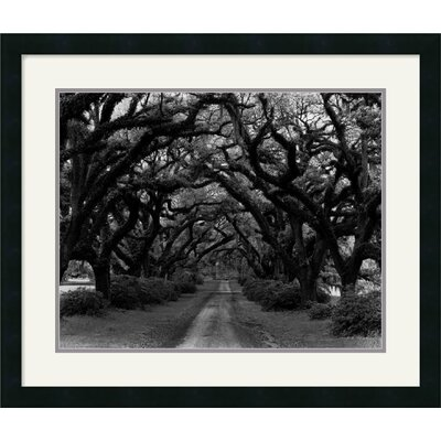 Amanti Art Path in The Oaks No. 2, Louisiana Framed Art Print by Monte Nagler