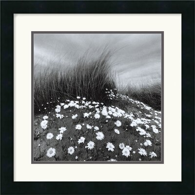 "Amanti Art Sand Daisies by Chip Forelli Framed Fine Art Print  - 18"" x 18"""