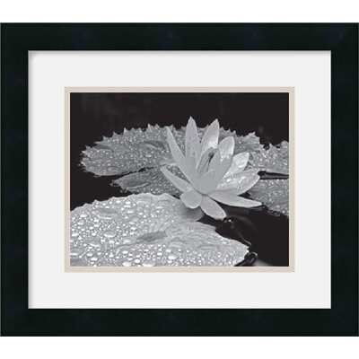 "Amanti Art Droplets on Water Lily by Dennis Frates Framed Fine Art Print - 14"" x 16"""