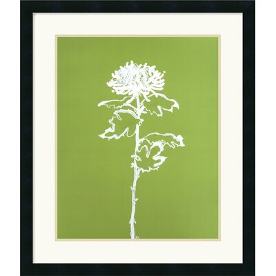 Amanti Art A Chrysanthemum I Framed Art Print by Filippo Ioco
