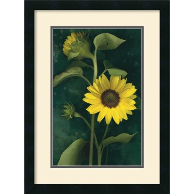 Two Sunflower Stems Framed Print by Christina Florkowski