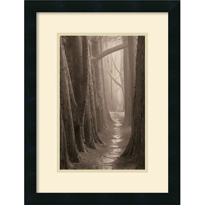 'Cypress Trail Framed' by Paul Kozal Framed Photographic Print