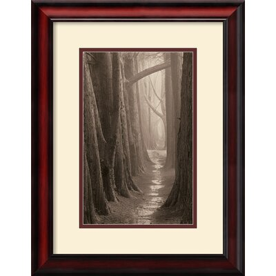 Cypress Trail Framed Print by Paul Kozal