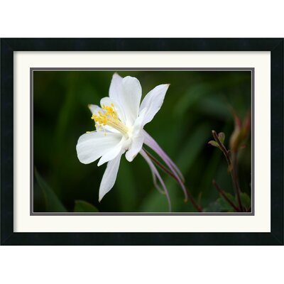 Amanti Art Columbine Framed Art Print by Andy Magee