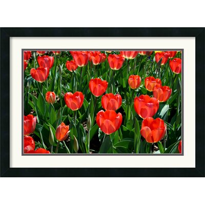 Amanti Art Tulips Tulips Framed Print by Andy Magee