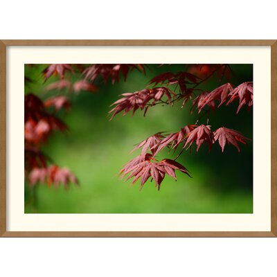 'Japanese Garden' by Andy Magee Framed Photographic Print