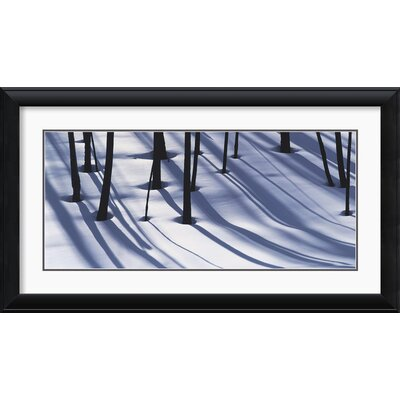 Pine Trees and Morning Shadows Framed Print by William Neill