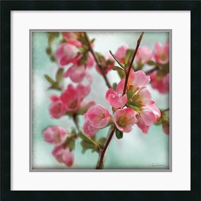 Quince Blossoms II Framed Print by Sue Schlabach