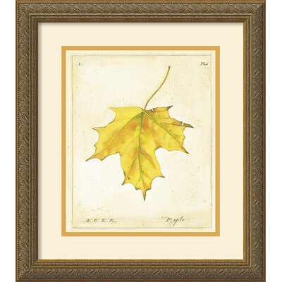 Maple Leaf Framed Print by Meg Page