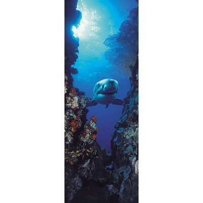 Komar Shark 2-Panel Wall Mural