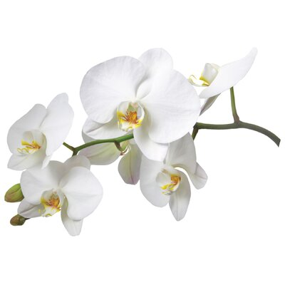 Brewster Home Fashions Euro White Orchid Wall Decals