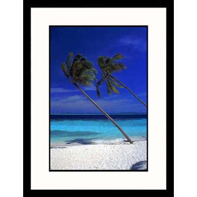 Great American Picture Tropical Palm Trees Framed Photograph - Frank Chmura