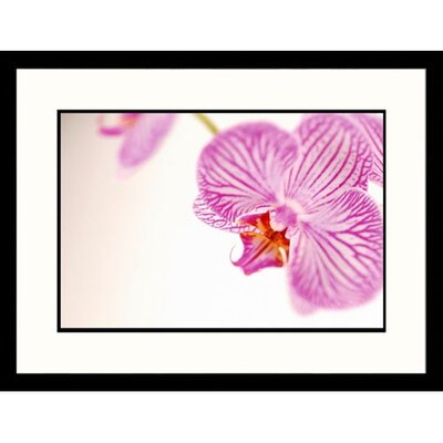 Florals Purple Striped Orchid Framed Photographic Print