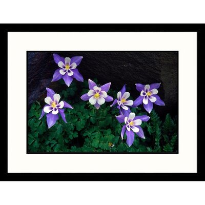 Great American Picture Columbine Framed Photograph