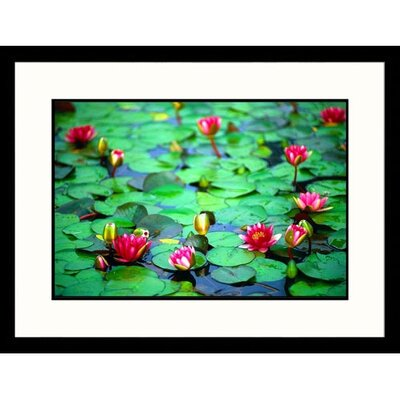 Great American Picture Red Water Lilies Framed Photograph