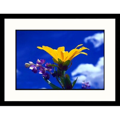 Dwarf Sunflower and Lupine Framed Photograph