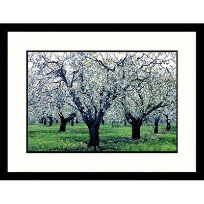 White Blossoms Ontario Framed Photograph