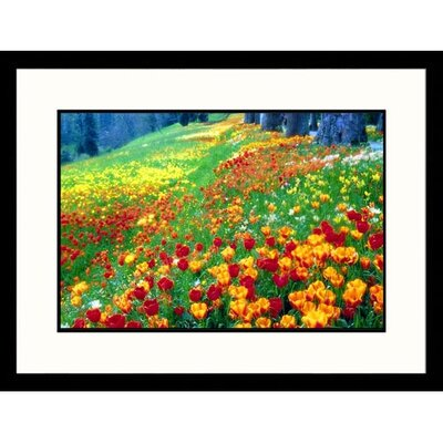 Great American Picture Red and Yellow Tulips Germany Framed Photograph