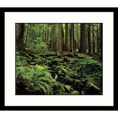 Landscapes 'Sol Duc Rain Forest' by Adam Jones Framed Photographic Print