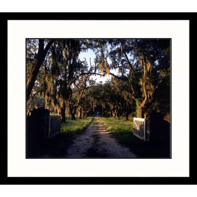 Trees Over Path, Ridgeland, South Carolina Framed Photograph - Eric Horan