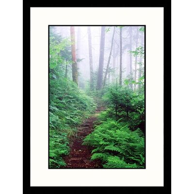 Landscapes 'Appalachian Trail, Great Smokey Mountains, Tennessee' by David Davis Framed ...