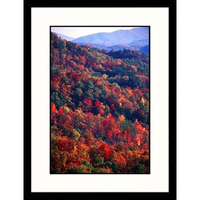 Landscapes 'Forest in Autumn, Tennessee' by Bob Jacobson Framed Photographic Print