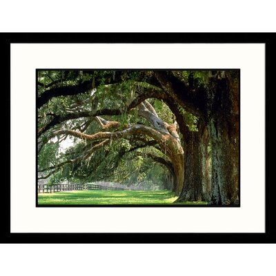 Oak Trees Boone Hall Plantation, South Carolina Framed Photograph - Mike McGovern