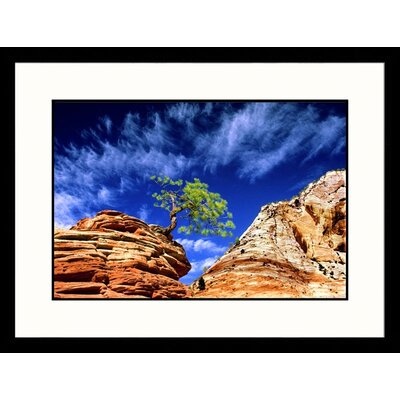 Great American Picture Dwarf Pine on Rock Framed Photograph - Russell Burden